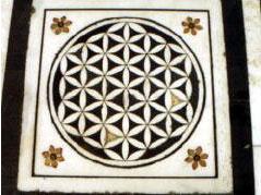 Élet Virága - Amistar, India